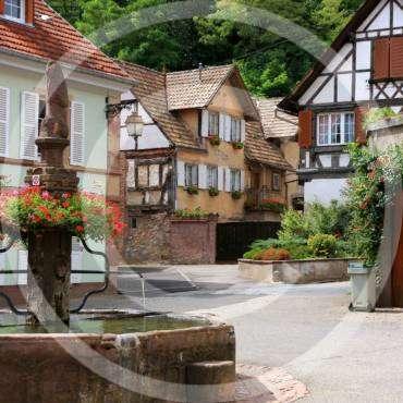 Courtyard Landscape