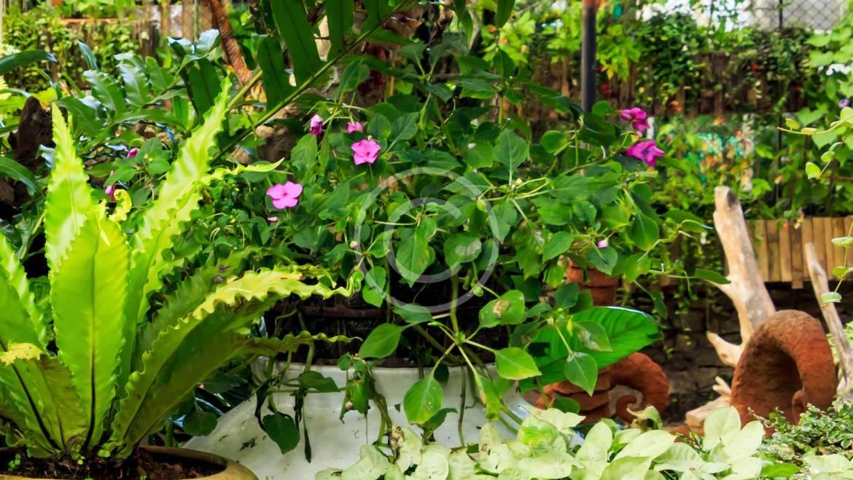 The Sun Loving Perennials